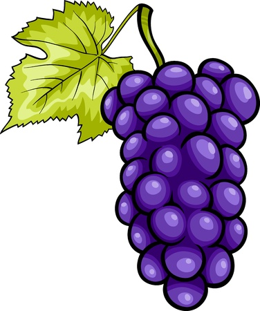 Cartoon Illustration of Bunch of Blue or Purple or Black Grapes or Grapevine Fruit Food Object