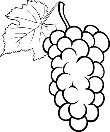 wine book: Black and White Cartoon Illustration of Bunch of Grapes or Grapevine Fruit Food Object for Coloring Book