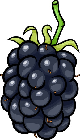 mure: Illustration de bande dessin�e de Blackberry Fruit objet de nourriture