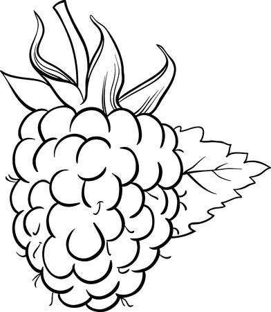 black berry: Black and White Cartoon Illustration of Raspberry Berry Fruit Food Object for Coloring Book