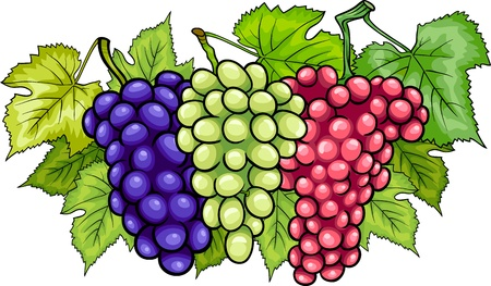 three colors: Cartoon Illustration of Three Bunches of White and Red and Black or Blue Grapes or Grapevine Fruit Food Design