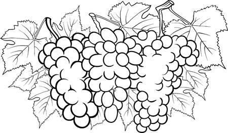 Black and White Cartoon Illustration of Three Bunches of Grapes or Grapevine Fruit Food Design for Coloring Book Vector