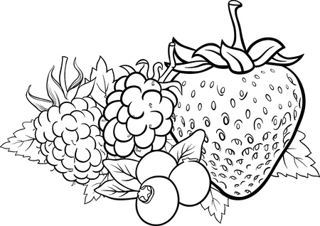 Black and White Cartoon Illustration of Four Berry Fruits like Blueberry and Blackberry and Raspberry and Strawberry Food Design for Coloring Book Vector