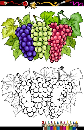 Coloring Book or Page Cartoon Illustration of Three Bunches of White and Red and Black or Blue Grapes or Grapevine Fruit Food Group for Children Education Stock Vector - 20333475