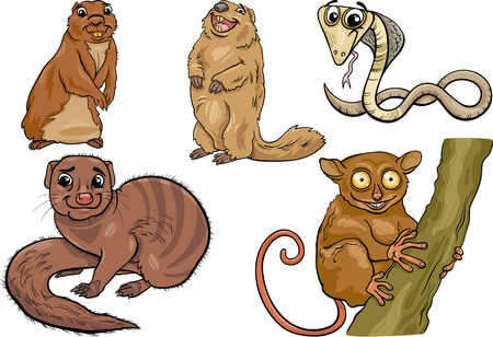 mongoose: Cartoon Illustration of Funny Wild Animals Characters Set