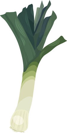 leek: Cartoon Illustration of Leek Vegetable Food Object