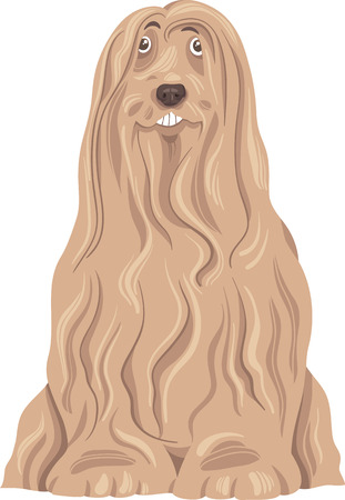 collie: Cartoon Illustration of Funny Bearded Collie Purebred Dog Illustration