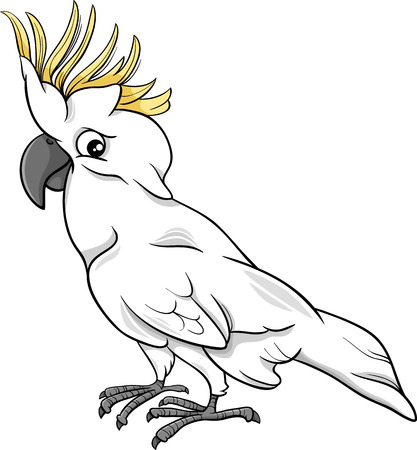 cockatoo: Cartoon Illustration of Funny Cockatoo Parrot Bird