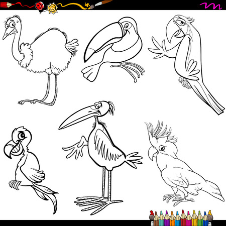 cockatoo: Coloring Book Cartoon Illustration of Funny Birds Characters Set