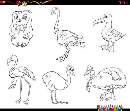 Black and White Cartoon Illustration of Birds Species Animal Characters Set Coloring Book Page Ilustrace