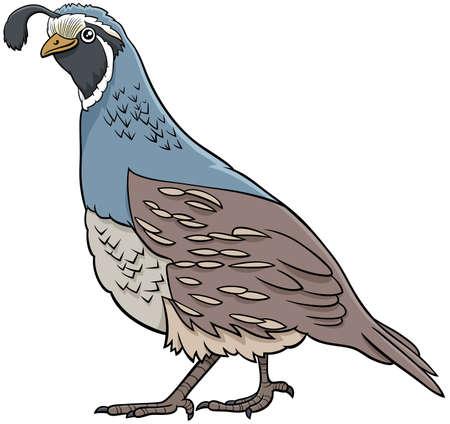 Cartoon illustration of funny quail bird animal character