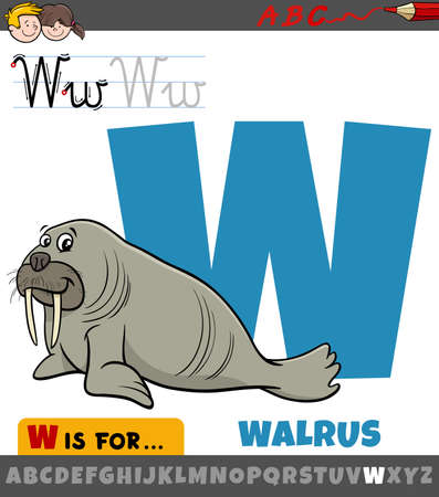 Educational cartoon illustration of letter W from alphabet with walrus animal character