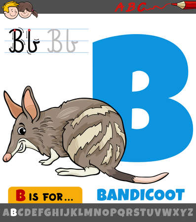 Educational cartoon illustration of letter B from alphabet with bandicoot animal character