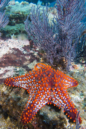 sea stars in a reef colorful underwater landscape background photo