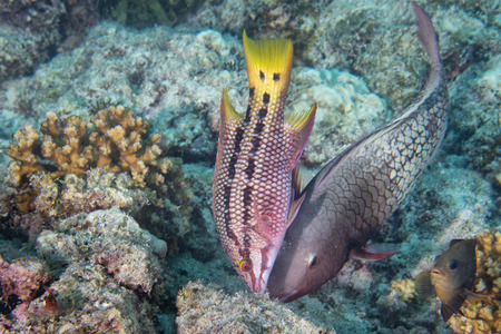 Colorful grouper in the reef background photo