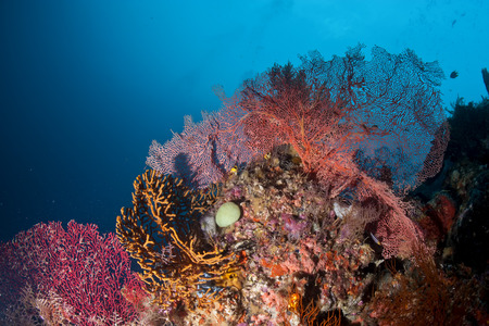 The colorful underwater realms of Raja Ampat, Papua Indonesia Stock Photo