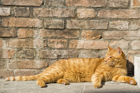A red cat while relaxing on sunny day on bricks background photo