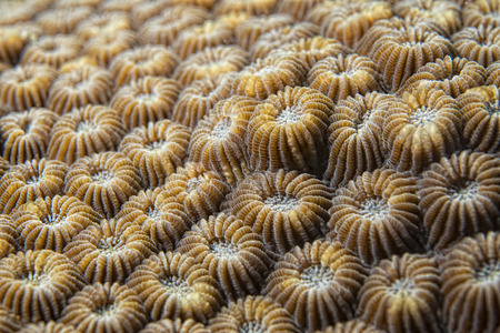 hard coral: hard coral detail macro while diving in Indonesia Stock Photo