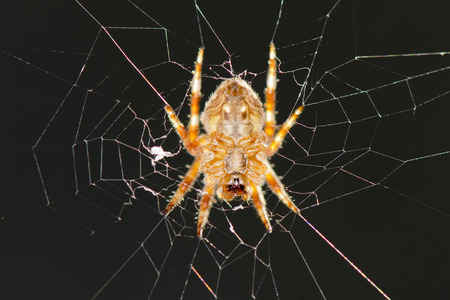 splotchy: A spider hanging in its web net
