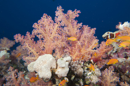 Colorful underwater landscape of red sea while scuba diving photo