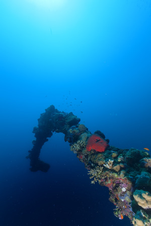Red Sea corals and fish on the blue background photo