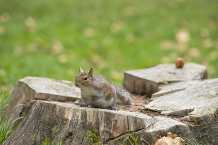 A squirrel looking at you while sitting on a tree  photo