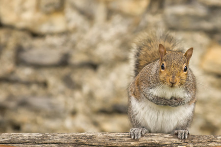 A grey squirrel standing on a tree photo