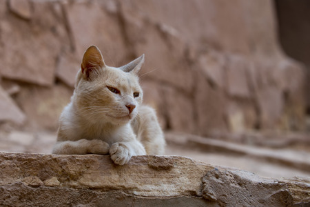 A cat relaxing in the ruins of Ait Benhaddou Maroc location of gladiator movie photo