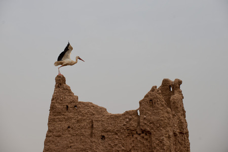 A ciconia nest in Ait Benhaddou Maroc location of gladiator movie photo