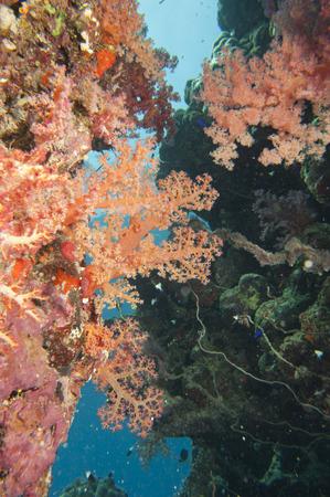 스쿠버 다이빙하는 동안 붉은 바다의 다채로운 수 중 풍경