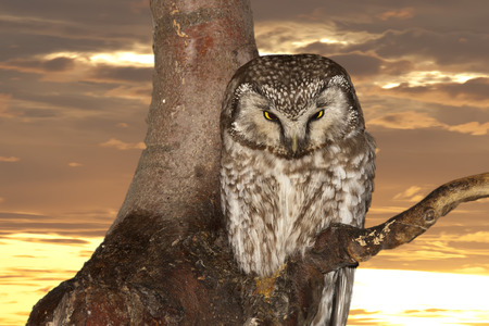 yelllow: Isolated Owl on the sunset yelllow background