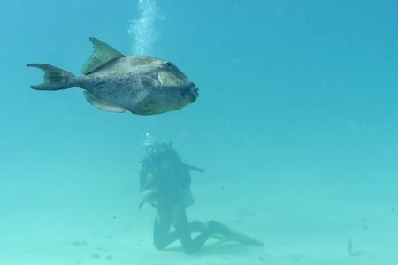 gatillo: Peces de disparo bajo el agua cerca de retrato Foto de archivo