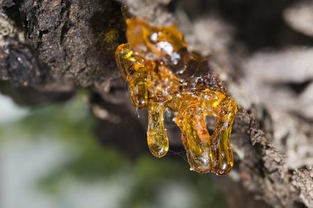 木の自然な樹脂をクローズ アップ マクロ
