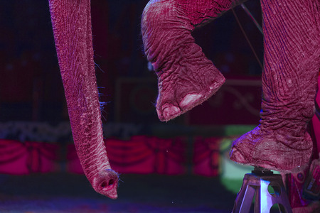 clumsiness: circus elephant on black background Stock Photo