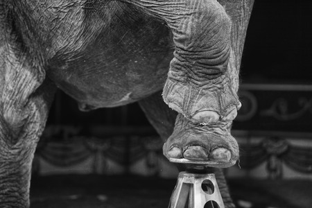 circus elephant on black background Stock Photo