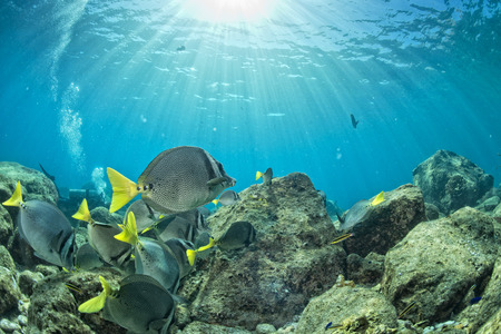 great barrier reef marine park: colorful reef underwater landscape with fishes and corals Stock Photo