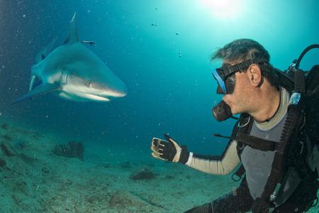 회색 상어가 스쿠버 다이버를 공격 할 준비가되었습니다. 스톡 콘텐츠