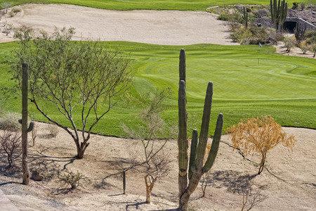 golf of california: desert golf course green in Baja California
