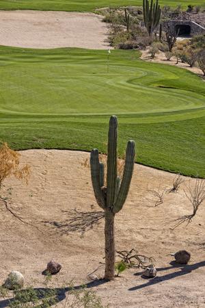 baja california: desert golf course green in Baja California