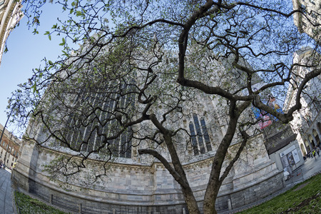 Milan Dome gothic Cathedral blossom tree detail