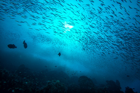 Inside a giant travelly tuna school of fish close up in the deep blue sea