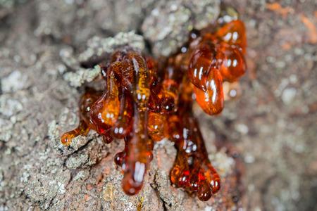 sap: tree natural resin close up macro