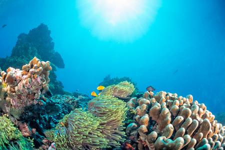 Maldives corals house for Fishes underwater landscape Foto de archivo
