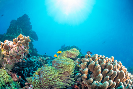 under the sea: Maldives corals house for Fishes underwater landscape Stock Photo