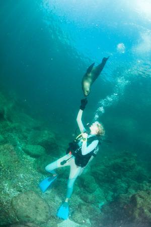 girl underwater: zeeleeuw zegel komt naar blonde duiker meisje onderwater