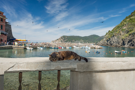 purr: Cat while resting in Vernazza Cinque Terre pictoresque village
