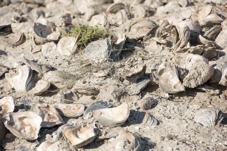 billion: eight to ten billion year old shells on the beach