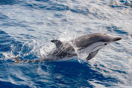 energy channels: dolphin jumping outside the sea
