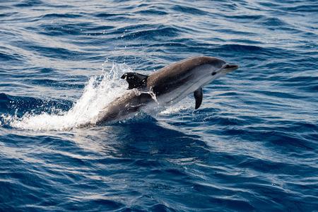 Delphin springen außerhalb des Meeres Standard-Bild - 40529570