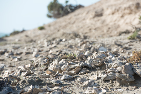 eight year old: eight to ten billion year old shells on the beach